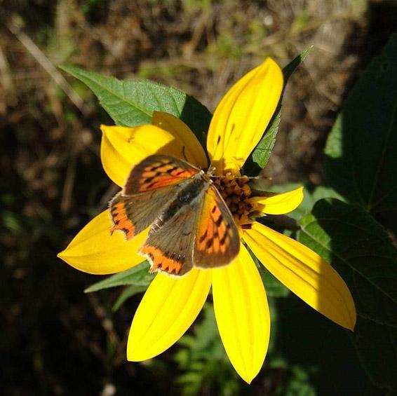 oasi-isola-farfalle